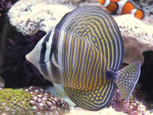 Is Your Aquarium A Centerpiece or An Afterthought?