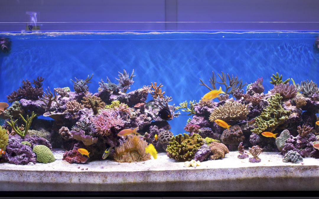 Outsourcing Aquarium Maintenance