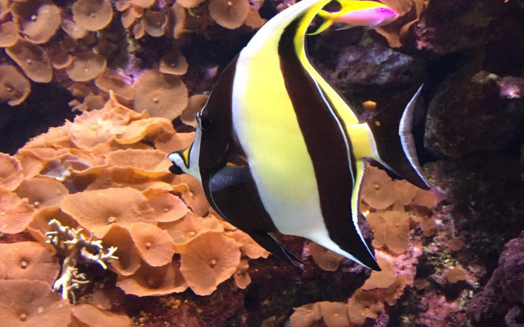 DIY Part 8 – Maintain a Reef Aquarium